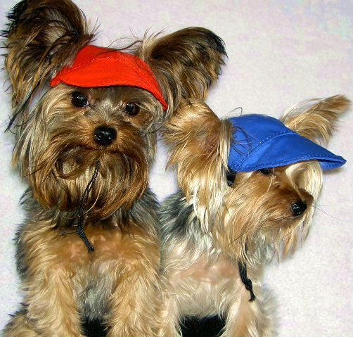 dog-visors