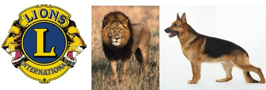 lions-dogs