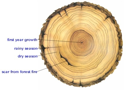 external image tree-rings.jpg