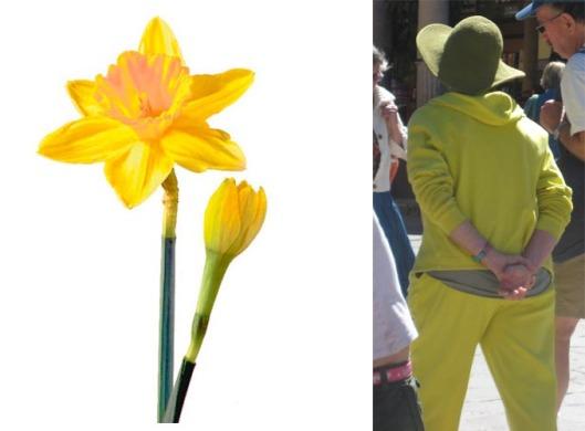 daffodil gang
