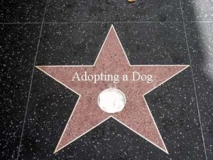 star dog adopt